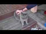 Кот разговаривает с хозяином. Очень смешно
