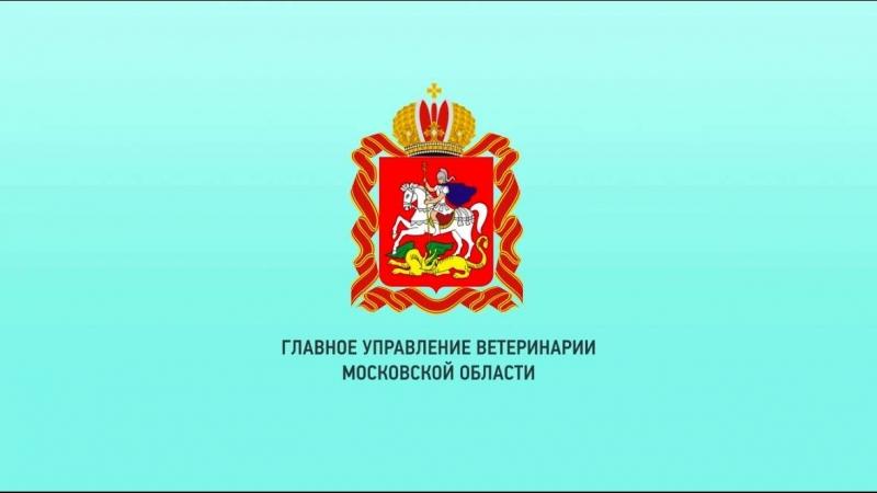 Регистрация специалистов в области ветеринарии, занимающихся предпринимательской деятельностью на территории Московской области