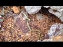 Змея в скалах