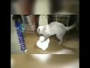 кошка уборщица