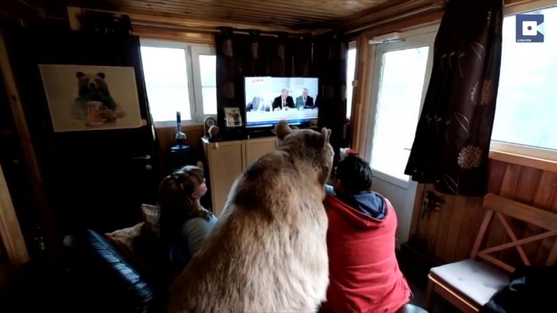 Медведь Степан и его необычная жизнь в русской семье.mp4