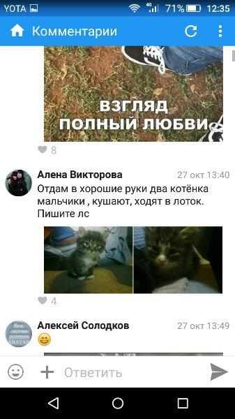 А [id122233691|Алёнушка] у нас плодит и отдает больных котят. В полтор