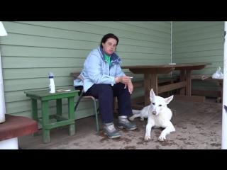 Догтренинг 16.  Как защитить собаку от клещей.