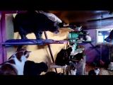 Сегодня в приюте была очень милая гостья -Юми со своими мамой и папой)) 14.01.18
