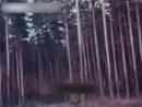 Лесосеменная плантация