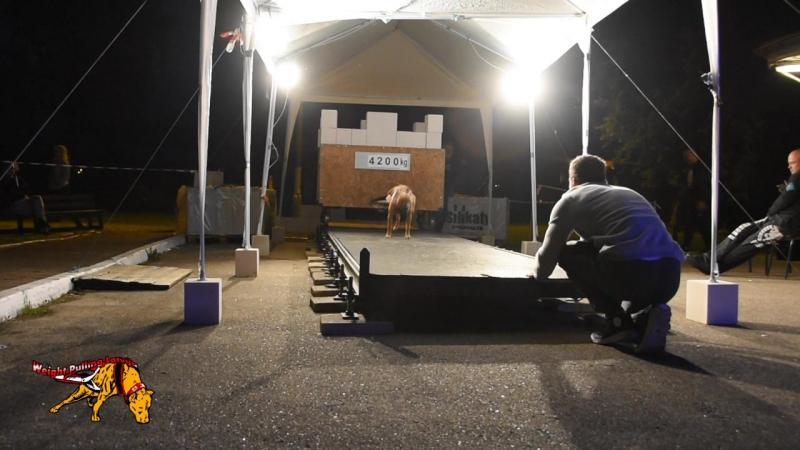 Kronas 4200 kg Pit Bull Show Białystok 2017 ,European Championship 1. vieta -20kg Weight Pulling
