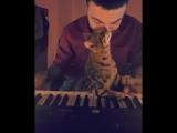 Музыка для кота (6 sec)