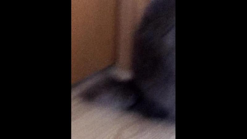 кот хулиган