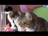 Беседа трёх котиков (6 sec)
