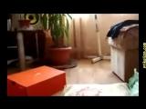 Приколы с кошками и котами #8. Смешные коты и кошки для поднятия настроения