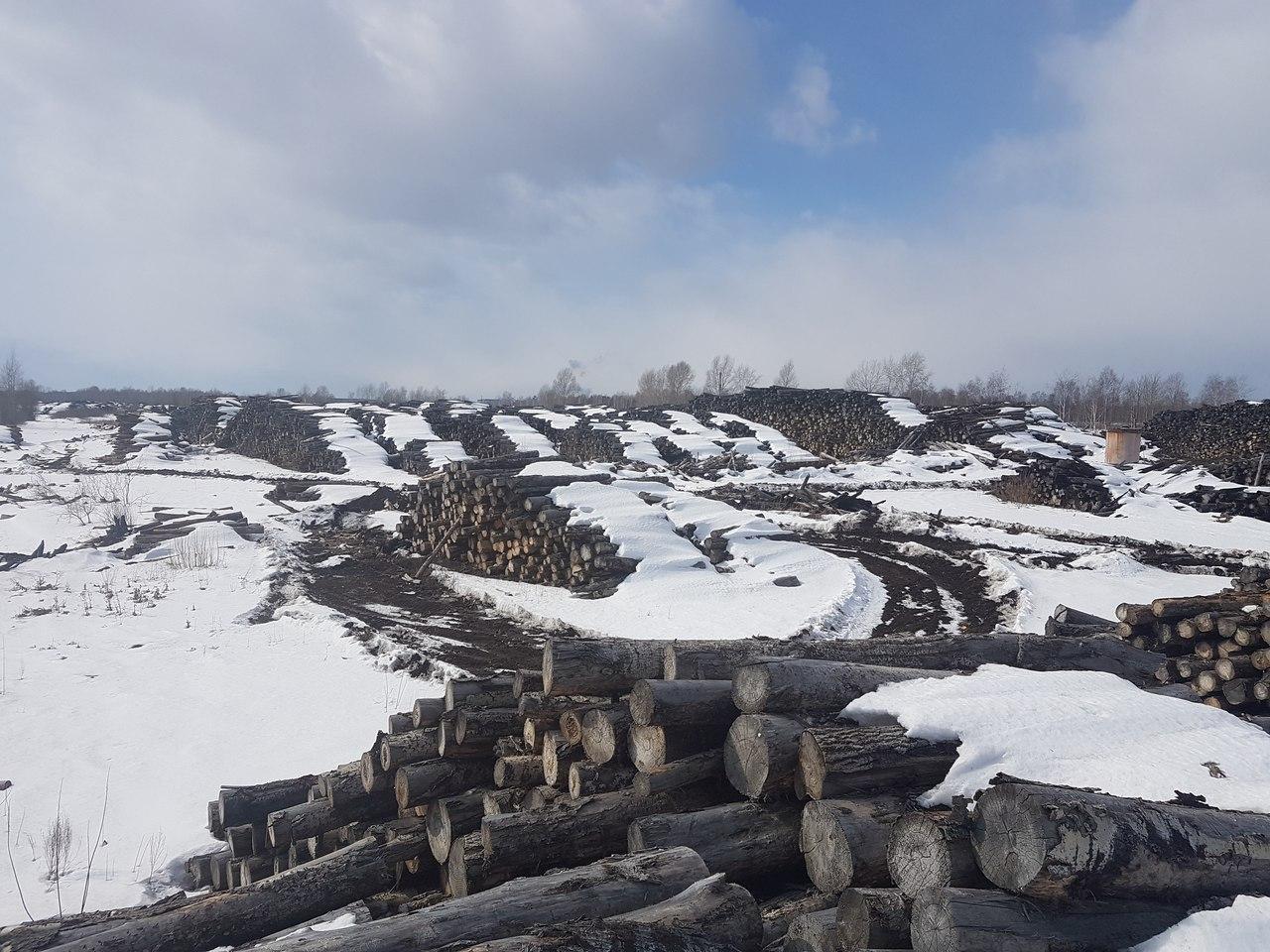 Общественник: Китайцы ведут сплошную вырубку лесов Сибири