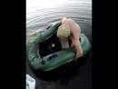 На рыбалке прикол