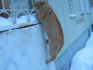 Кот романтик 😙