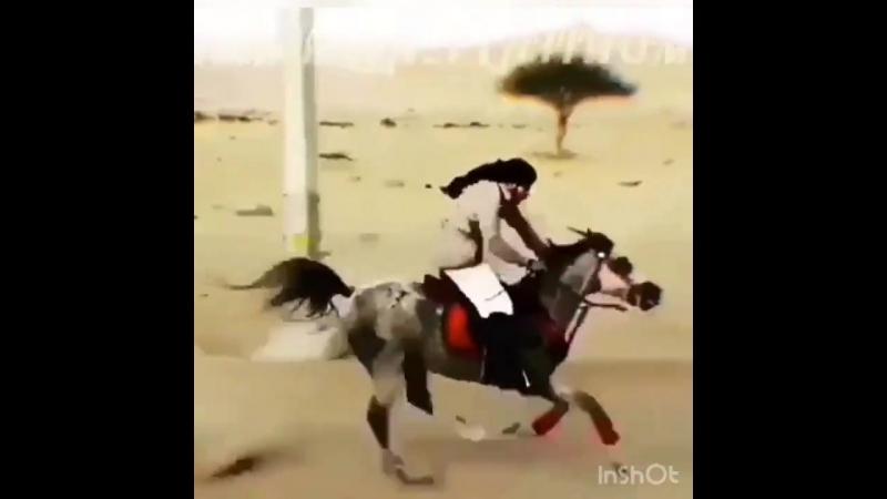 Racing_horse