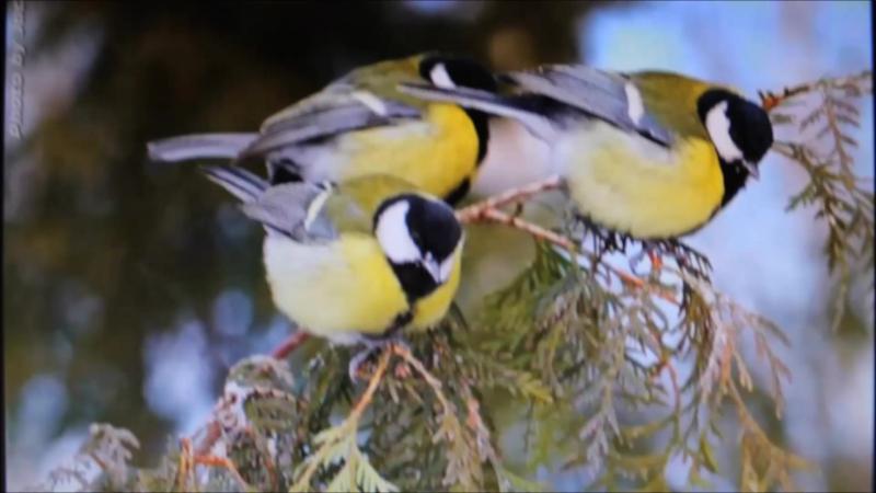 акция СМиД Птицы наши друзья