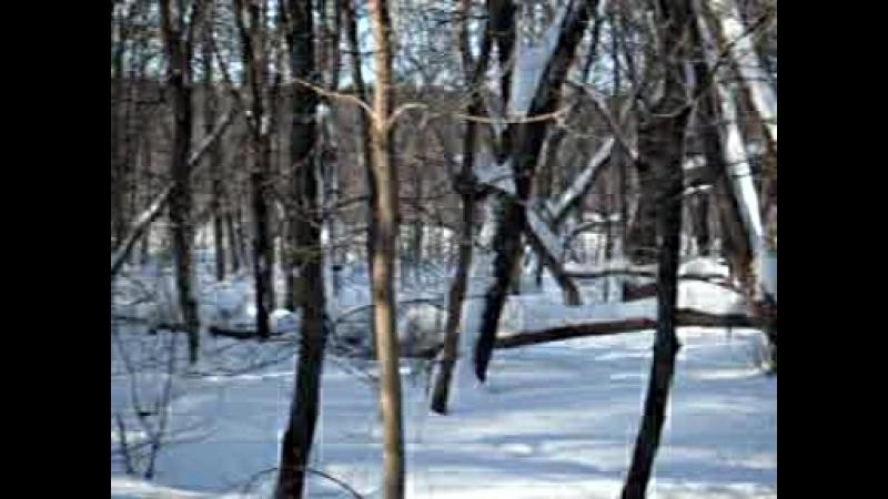 Челнинские Экстрималы лыжники