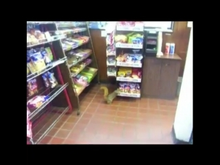 Animals on caught on security camera