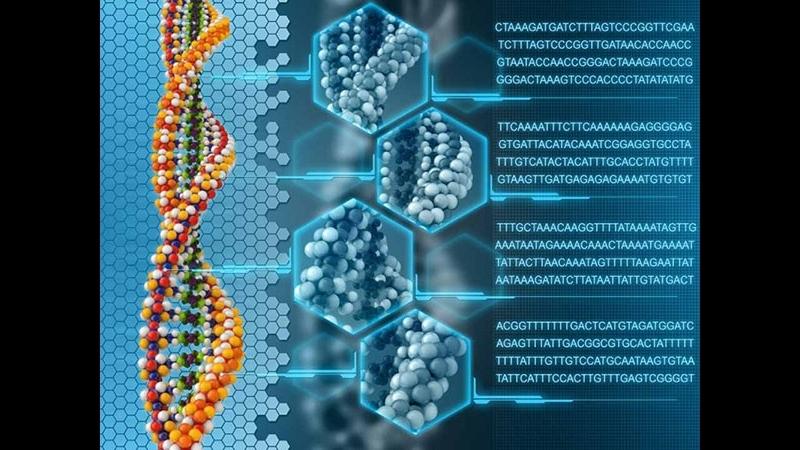 Ремонт молекулы ДНК ...