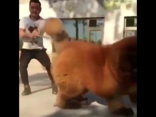 Он просто поиграть хочет, он не кусается