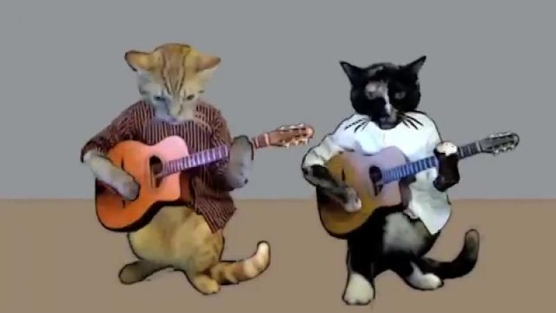 Chuck Colombo -My cat is a zen master