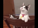 Коты впервые увидели включенный вентилятор
