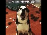 Собака не хочет слушать хозяина ??