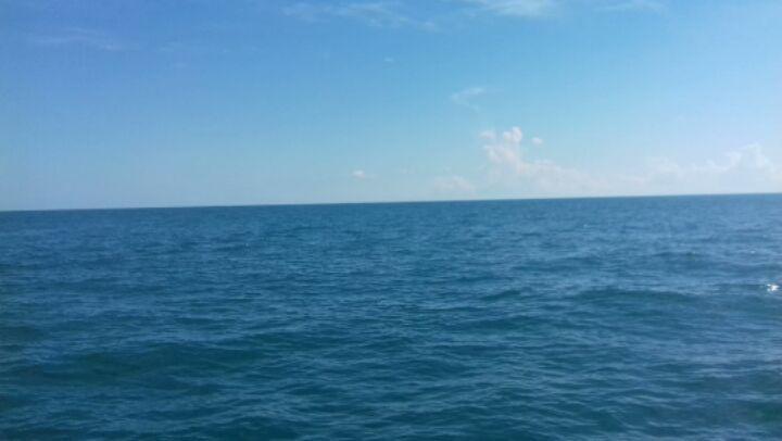"""светка on Instagram: """"Мы вели на них видео охоту. И поймали...в кадр ) дельфины море сочи"""""""