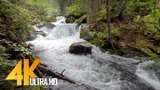 4K Forest Waterfalls at Enchantment Lakes Trail - Nature Sounds of a Waterfall - Trailer