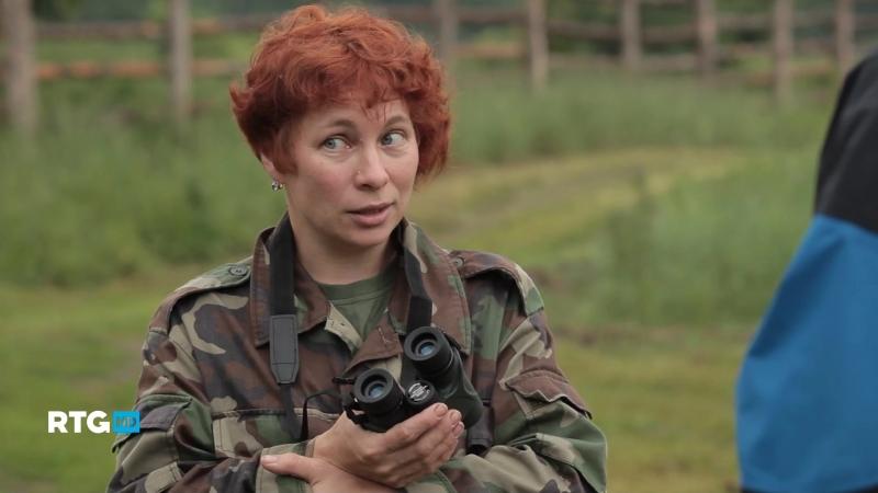 Заповедник Брянский лес. В поисках черного аиста (02)