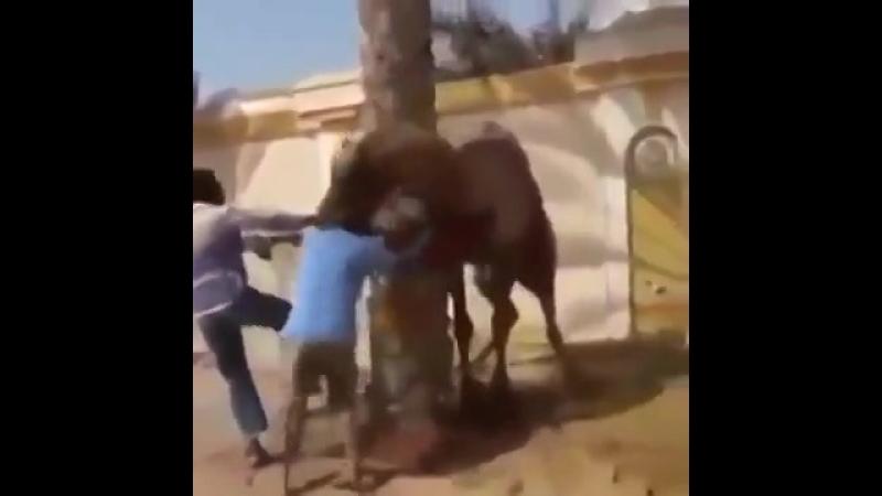 Чтобы не допускали жестокое обращение с животными