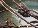 Детеныш ленивца 5 апр