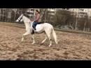 Прекрасная лошадь