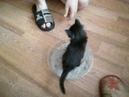 Приучаем котенка к туалету. 24.05.18 год.