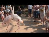 Фламинго в зоопарке Khao Kheow Open Zoo