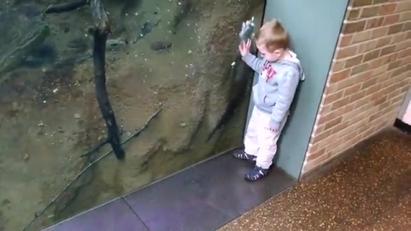 Kids Play With Otter at the Zoo - 995369