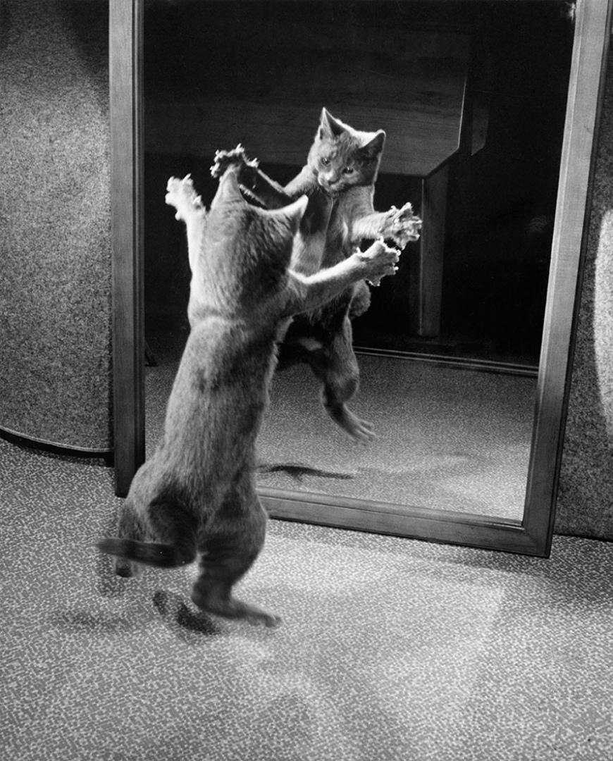 Смешные картинки про зеркало