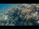 EILAT RED SEA