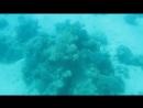 Мой Подводный мир Красного моря