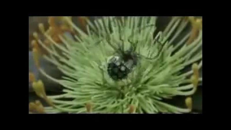 Стимпанковая эволюция
