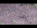 Суета у птичьей кормушки бывает и летом