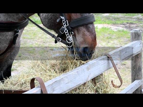 лошадь жует сено horse eat hay 46569