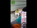 foot_ball_cat