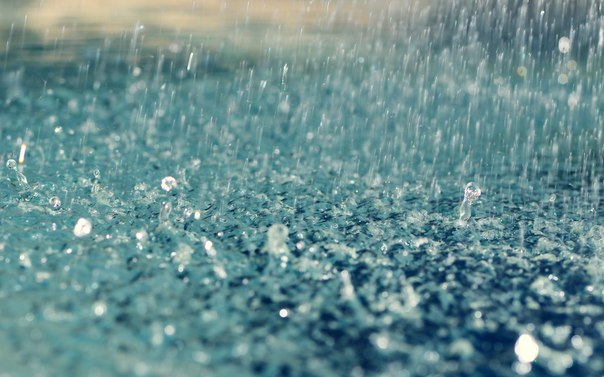 диссертации смотреть онлайн бесплатно самые актуальные тренды  Макс всегда чихает перед дождём Он чихнул Пойдёт ли дождь Проверь себя
