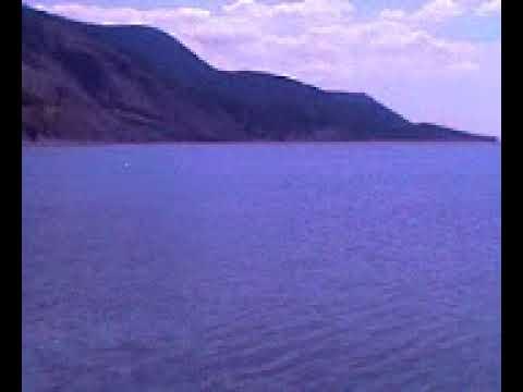 Охота дельфинов, Черное море
