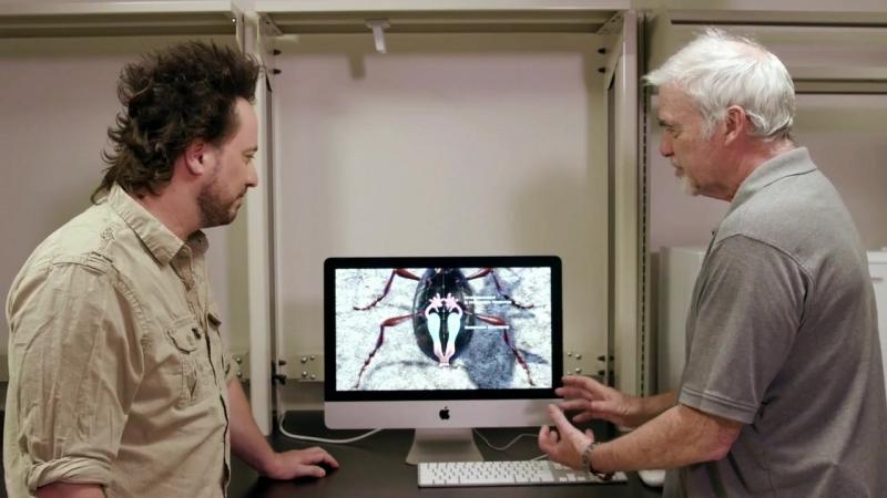 Древние пришельцы (12 сезон: 1-12 серия из 16) / Ancient Aliens [2017, Документальный, паранормальный, уфология, мистика, альтер