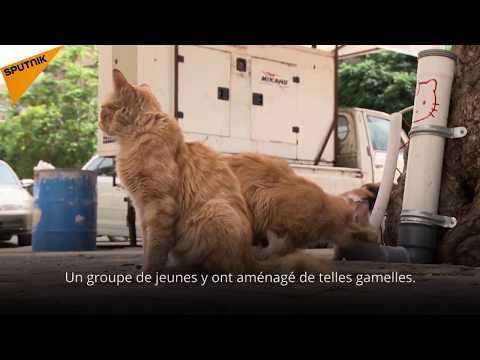 Les animaux syriens ont de la chance: des gamelles pour chats errants sont installées à Damas