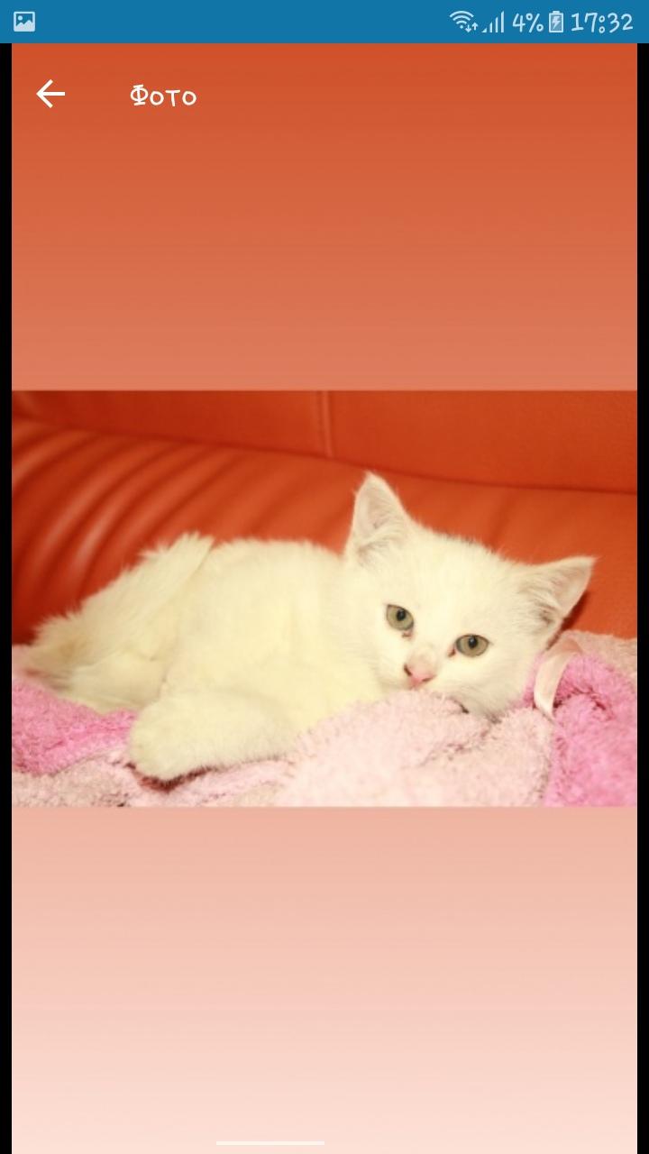 В районі 10 школи 30 липня пропало біле кошеня кішечка, якщо ви її бачили, або ж знаєте де вона знаходиться, повідомте будь ласка за номером.