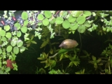 my snail made a boat out of a leaf and I'm very impressed