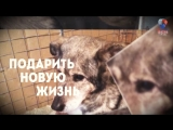 В ДОБРЫЕ РУКИ и ивановский приют для животных Майский день предлагают всем принять участие в судьбе бездомных животных