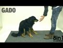 Финский Фокусник и иллюзионист Taikuri Jose Ahonen обманывает собак (720p) (via Skyload)